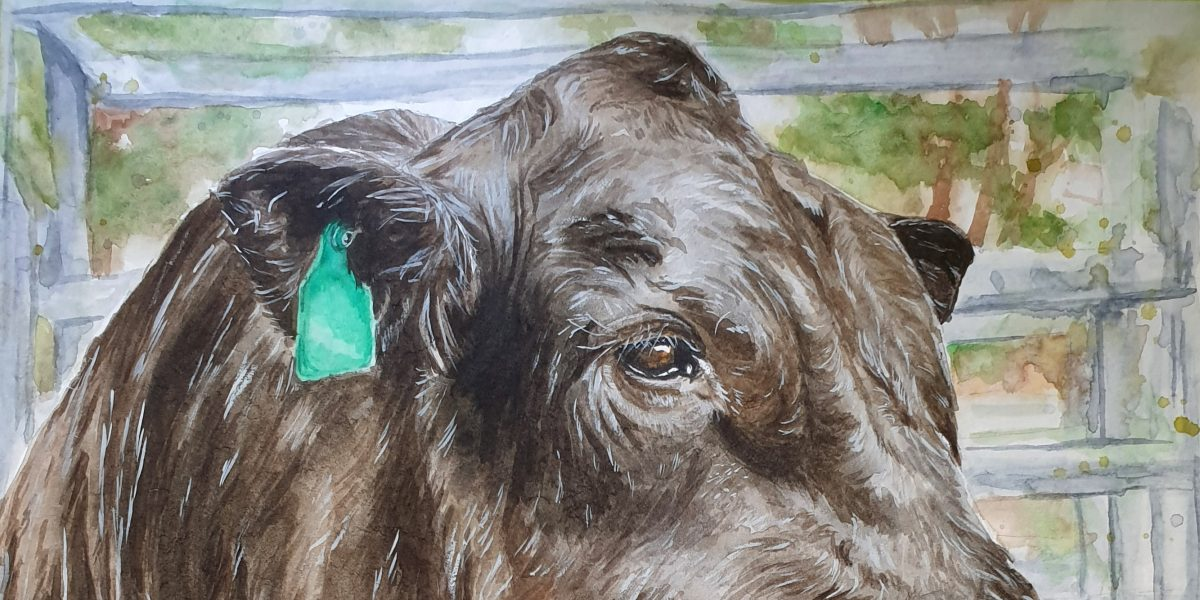 Painting BULL in WATERCOLOUR